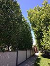 hedge outside a house