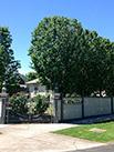 house and a hedge