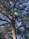 man in a tree