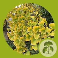 plant health icon