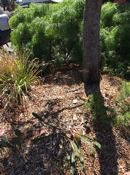 Assured tree care healthy garden with mulch and regular tree pruning