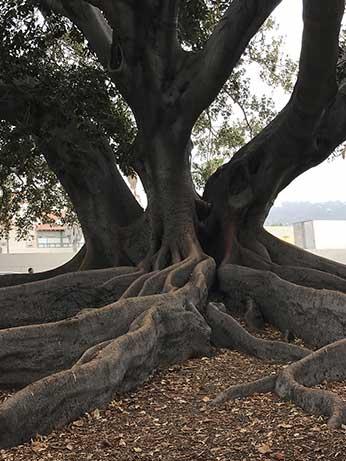 Assured tree care extravagant tree trunck