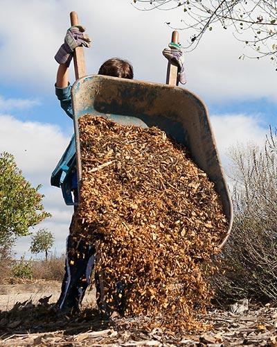 man emptying a wheelbarrow of mulch